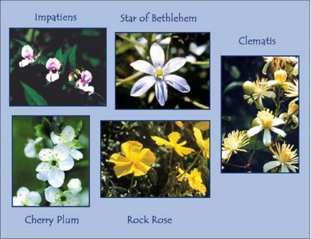 rescue remedy piante