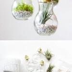 Deliziosi portafiori e piante